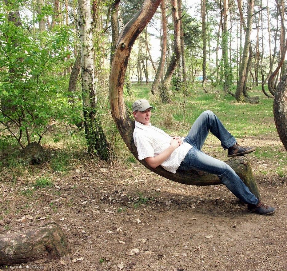 Khu rừng cong bí ẩn ở Ba Lan