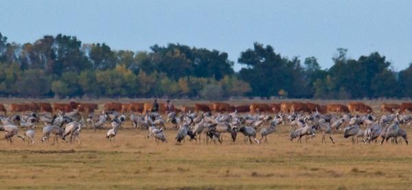 Tham quan vườn quốc gia Hortobagy