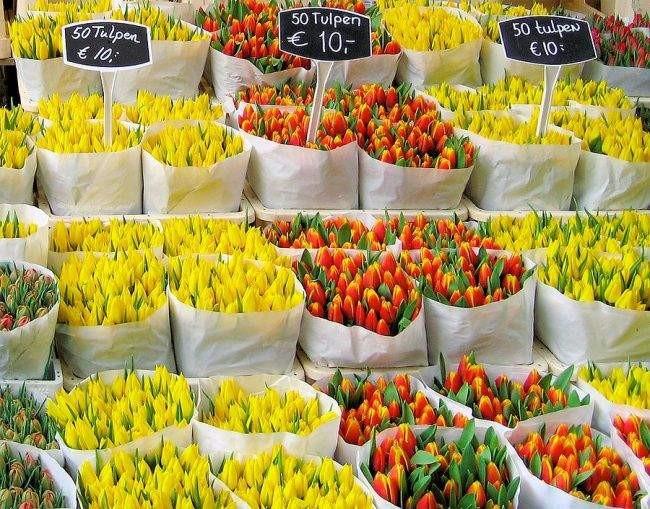 chợ hoa Bloemenmark2