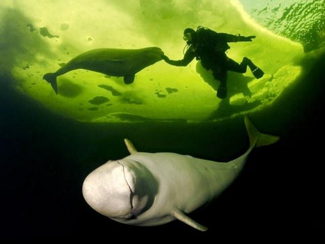 lặn biển băng1