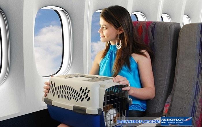 Vận chuyển động vật cảnh trên cabin Aeroflot