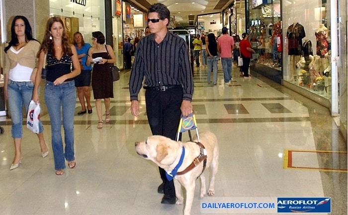 Hành khách khuyết tật đi cùng chó dẫn đường